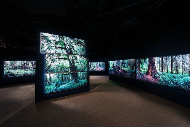 黑暗的画廊空间的照片,显示了4个独立的大墙壁上的照片打印的大型森林场景,填充了整个墙壁。这些脚印显示了高大的树干,绿色的冠层和地面的蕨类植物。画廊空间的天花板完全黑暗。空间的地板是一条有纹理的棕色地毯。森林的每一幅画似乎都在空间中熠熠生辉。