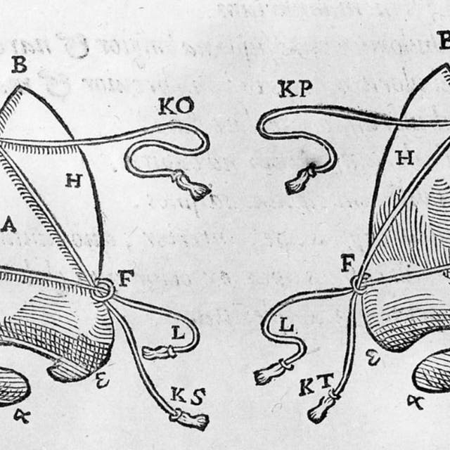 Print of old nose diagram