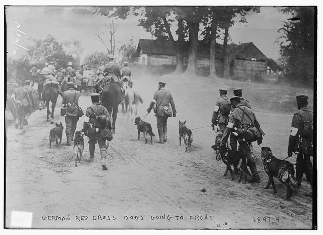 A black and white picture of soldiers walking with dogs on leashes.