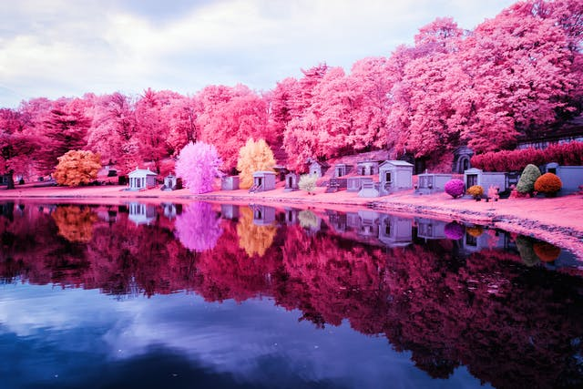 Infrared photograph of a graveyard overlooking a lake. A series of crypts are reflected in the lake, surrounded by pink trees. The pink hues replacing the greens of the grass and trees are a result of the infrared technique.