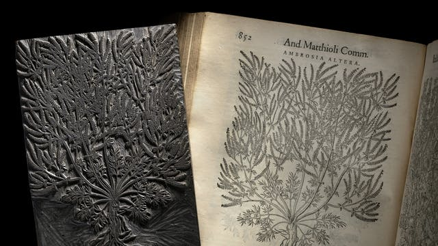 Photograph of a woodblock carved with an intricate illustration of a plant. The woodblock is resting on the open page of a book, where a corresponding print from the woodblock has been made. The page is titled with,