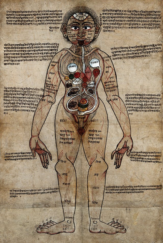 A colour anatomical illustration of a man, face on, with organs and veins shown, with Nepalese and Sanskrit texts surrounding it.