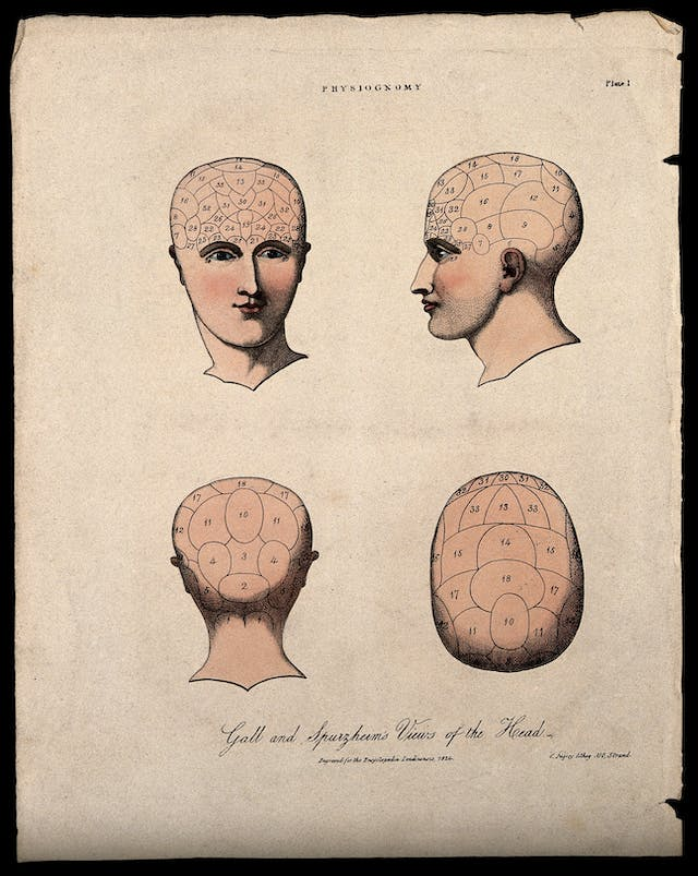 Four views of a human head, sketched with their functional divisions.