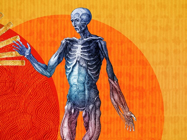 Detail from a larger abstract digital illustration featuring three anatomical depictions of the human body. This image depicts the muscular structure. Circles of energy are shown to be radiating from each of the bodies, overlapping each other. The main colour combinations are yellows, reds and oranges. The background shapes contain textures and patterns.