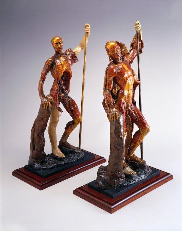 Image of wax anatomical figure