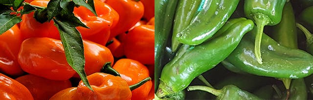 A composite image showing red habanero peppers and green jalapeño peppers