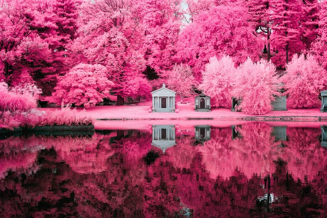 Infrared photograph of Green Wood Cemetery lake. A series of crypts in the centre of the frame are surrounded by pink trees. The whole scene is reflected in the lake which sits in the bottom half of the scene. The pink hues replacing the greens of the grass and trees are a result of the infrared technique.
