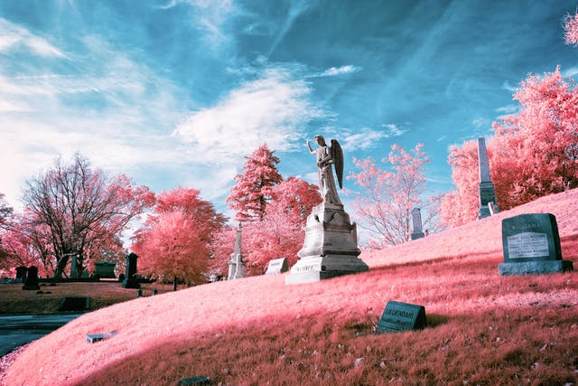 Infrared photograph of a graveyard scene. A statue of an angel is centred on a hill, facing to the left of the frame with its right hand raised. The pink hues replacing the greens of the grass and trees are a result of the infrared technique.