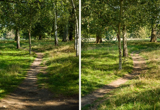 Photographic diptych. Both images show a wooded parkland scene with a rough footpath snaking away into the distance. The paths are flanked by rough grassland and trees. Each scene is lit by strong sunlight which in parts is turned into dappled shadows onto the ground by the leaf canopy.