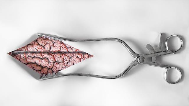Brain illustration by Emily Evans