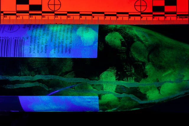 Photograph of part of a wine bottle shot under UV lighting which has reviewed finger prints. Due to the UV lighting the colours in the image are predominantly green and blue. A scale rule in the image has turned bright red.