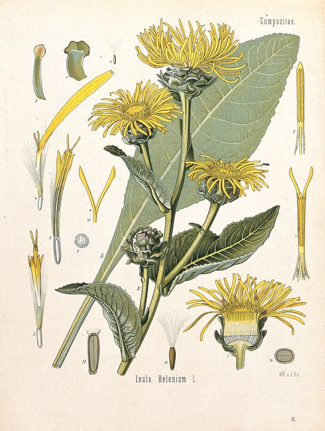 A diagram of a yellow flower featuring details of its various parts.