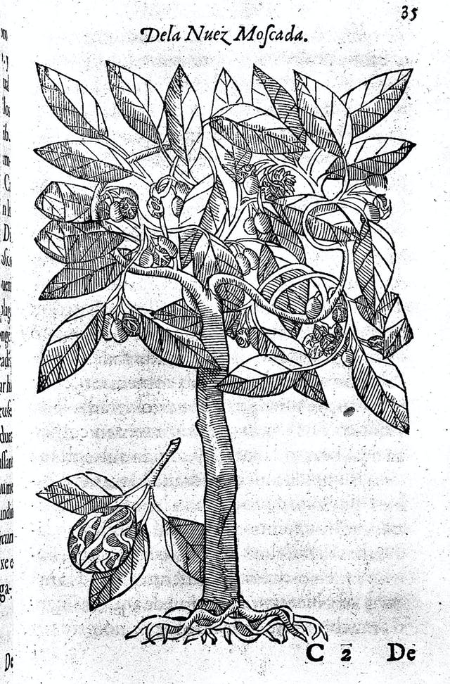 Photograph of a single page from a book showing a page-size, black and white engraving of a plant.