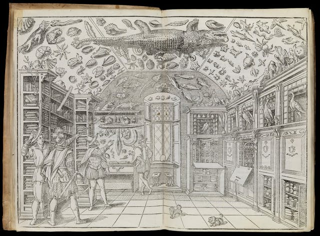 Image of black and white print depicting men in a room full of cabinets of curiosities, including sea animals all over the ceiling