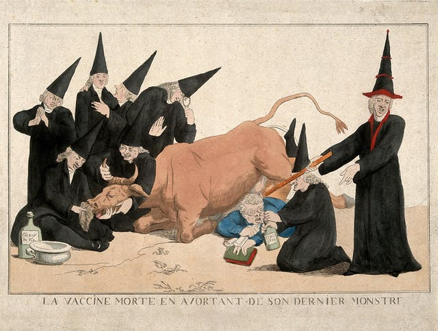 A group of physicians stand by a cow that has died while