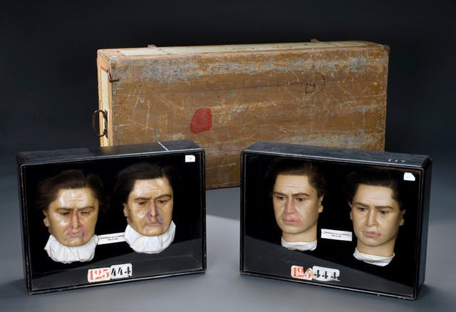 Image of four wax heads, two sharing each black box container.