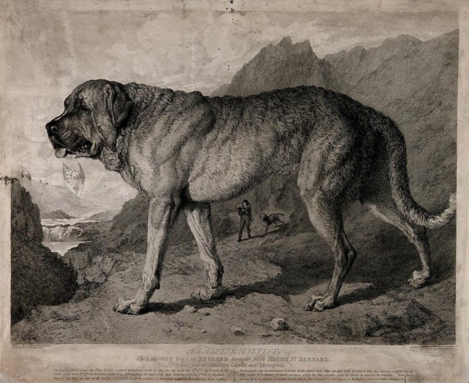 Dogs to the rescue in the Wellcome Collection
