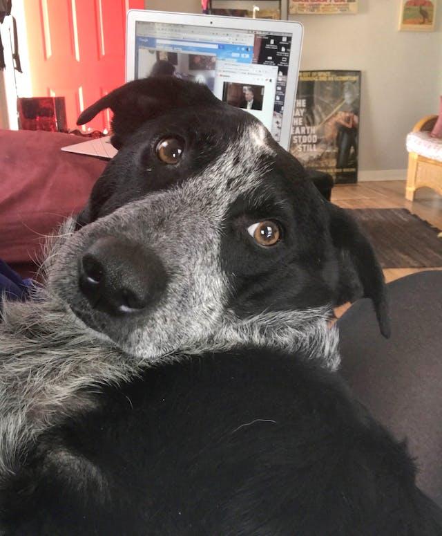 Charlie the seizure dog