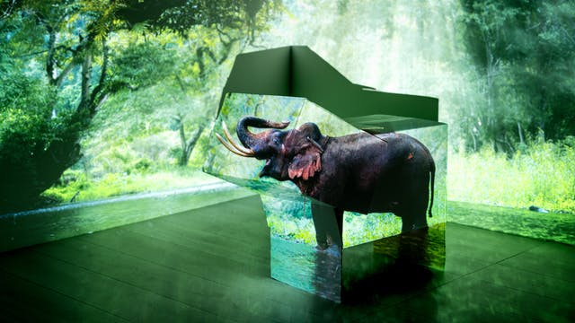 Photograph of the corner of a room showing the walls and a section of the wooden floor. On the floor is an arrangement of cardboard boxes. Onto the whole scene is projected an image of a forest and an elephant. The boxes have assumed the shape of the elephant and have its image projected onto their sides.