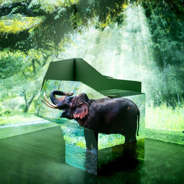 房间一角的照片,显示了墙壁和一部分木地板。地板上放着一堆纸板箱。在整个场景上投射出一片森林和一头大象的图像。盒子的形状是大象的形状,并把大象的形象投射在盒子的两侧。