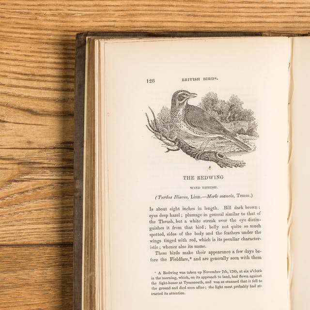 Photograph of the left hand page of an open book on a wooden surface. The left hand page shows an engraving of a Redwing bird in a woodland scene. Below the engraving is a descriptive text about the bird.