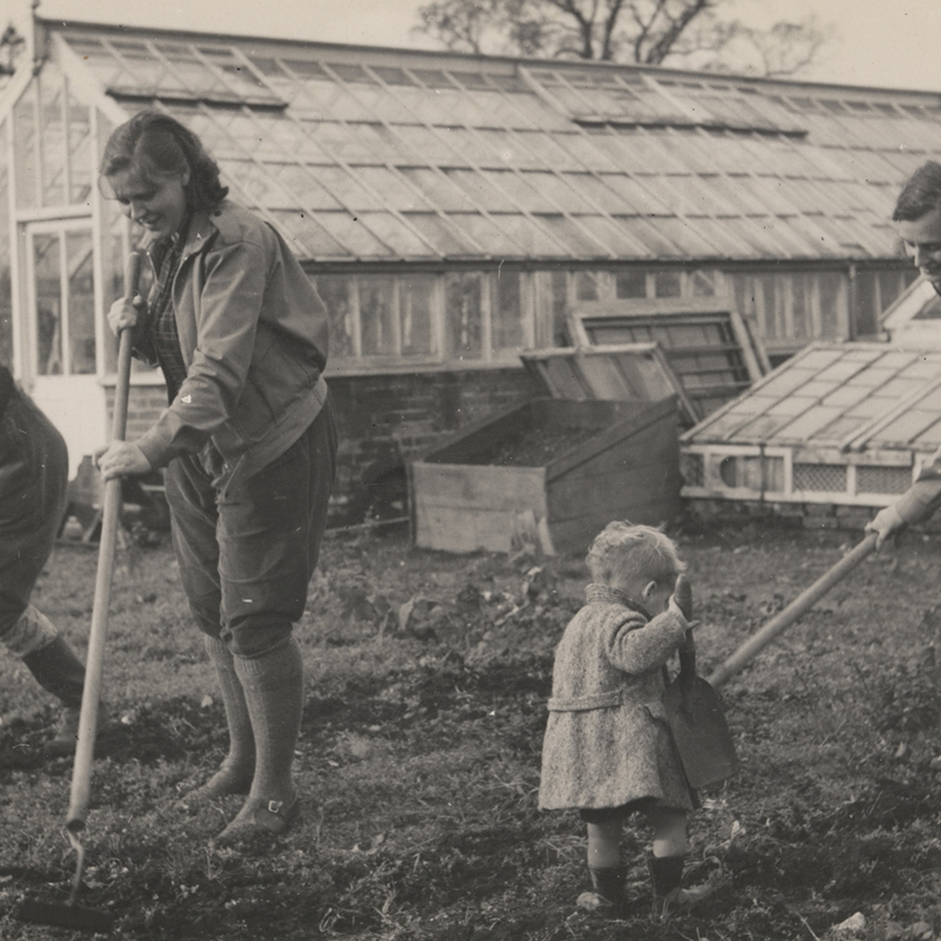 Black and white photograph showing three women hoeing some land, with a small child in the foreground holding a large trowel. Two large glasshouses stand behind them.