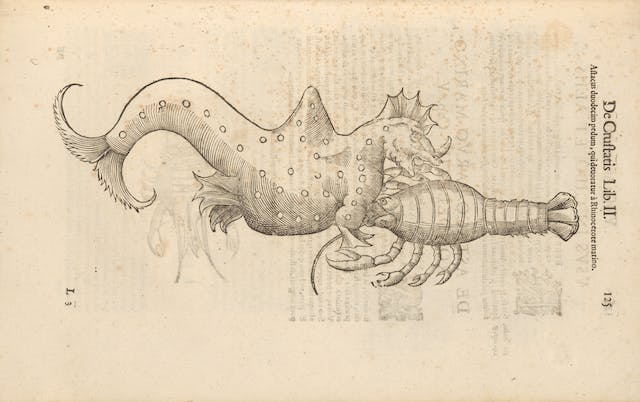 Photograph of a woodcut illustration in a 17th century early printed book, depicting a strange hybrid creature.