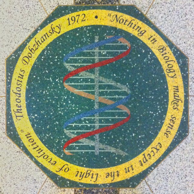 Mosaic medallion in the floor of the main hall of the Jordan Hall of Science, University of Notre Dame. Bears the quotation from Theodosius Dobzhansky (1900-1975): Nothing in Biology makes sense except in the light of evolution.