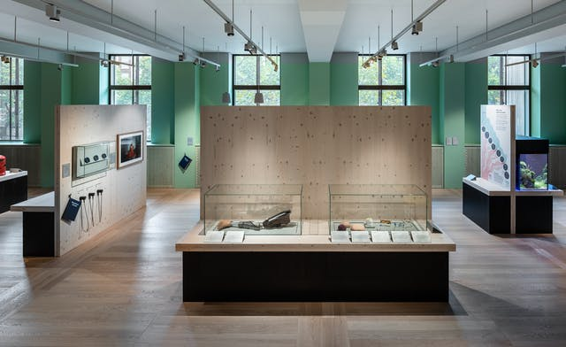 A photograph showing two glass cases side by side displaying exhibits at waist height in the Being Human exhibition. The glass cabinets are surrounded by pale wooden panelling, and are on black plinths. The wall behind with windows overlooking Euston Road is painted a pastel green. Other freestanding panelling can be seen with exhibits including a fish tank and audio guides hanging from the panelling.