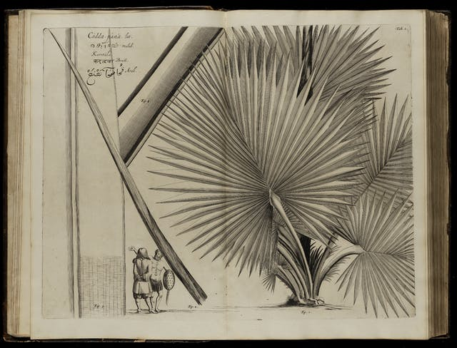 A photograph of a book opened onto a black and white engraving of a plant, which fills the entire double-page spread.