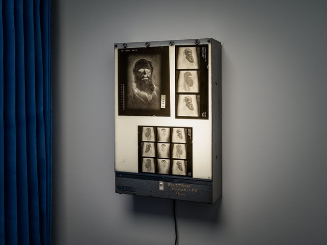 Photograph of an x-ray light box fixed to a white wall. Beside the light box in the edge of blue medical ward curtains. On the light box are several x-rays made up of the inverted portraits of Charles Darwin.