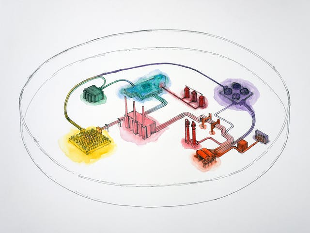 Watercolour and pen and ink illustration on white textured paper. The illustration depicts a cluster of industrial looking buildings seen from a high viewpoint. Each building has a different colour wash over it, yellow, red, green for example. Each building is connected by a system of pipes. Surrounding the whole complex are 2 circles which seem to suggest a walled enclosure.