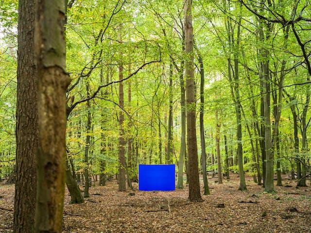 彩色景观照片显示一个古老的林地场景。在图像中央下方的空地上,有一个大的矩形摄影背景框。横跨框架是一个充满活力的蓝色色度关键织物。木地板上覆盖着锈色的树叶和掉落的树枝。在图像的左右两边,高大强壮的树干穿过框架上升到绿色的叶子冠层。随着场景渐行渐远,屏幕周围的树干继续上升。绿树的叶子遮住了整个天空,只在这里和那里瞥上几眼。