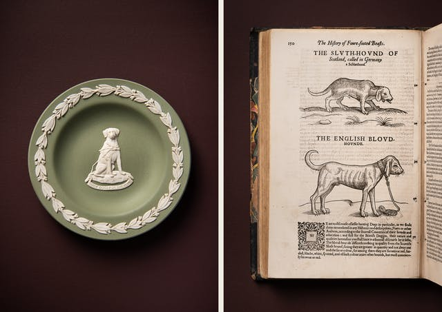 A photographic diptych. The image on the left shows a modern decorative plate in a muted green in the middle of which there is an image of a Labrador guide dog wearing a harness underneath which is the text 'Guide Dogs For The Blind' on a scroll. Both feature in white relief, as does a floral design around the edge of the plate. The image on the right shows the left hand page of a medieval book featuring two illustrations of bloodhounds in a black outline and a paragraph of text below. The items appear on a plain brown background.