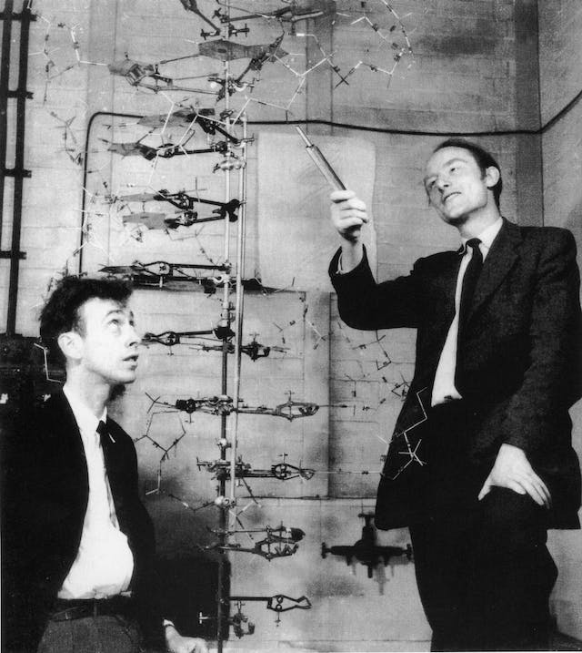 Photograph showing two men in suits and ties, looking at a stick-and-ball model of DNA. The older man, to the right, points at it with a stick. The younger man, on the left, looks upward at the model and his colleague.