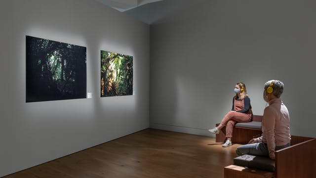 Photograph of a gallery space with grey walls and a wooden floor. Hung on the walls are two spotlit large photographs of trees in a wood. To the right of the image are two benches. Sat on each bench is a person, looking at the photographs on the wall. They are both wearing yellow headphones and face coverings.