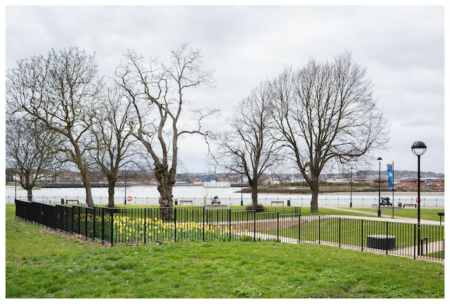 Photograph of a grass parkland area with leafless trees, intersecting pathways and benches. There is a large river in the background with buildings in the distance. Cutting across the image from centre left to bottom right of the image is a black metal railing fence. Behind the fence and partially obscured is a large area of bright yellow daffodils.