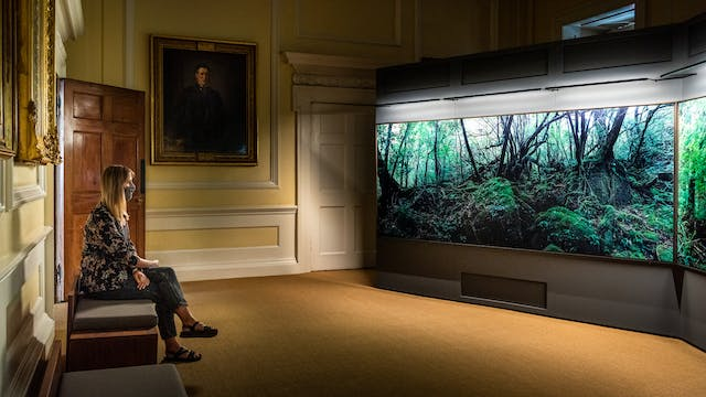 Photograph of a dark exhibition space. On the right side of the image are 2 large free-standing walls on which 2 photographic prints of large forest scenes are displayed, filling the entire walls. The prints show tall tree trunks, green leaf canopy cover and ground level ferns. To the left of the image is the ornate decor of the room within which the prints are being displayed. This room is a yellow colour with white painted wooden paneling and architrave details. On the far wall is a gilt framed oil painting portrait. To the far left is a padded bench. Sitting cross legged on the bench is a woman with long hair, a patterned blouse and dark trousers. She is wearing a grey face covering. She is looking out toward the photographic prints, arms loosely crossed in her lap.