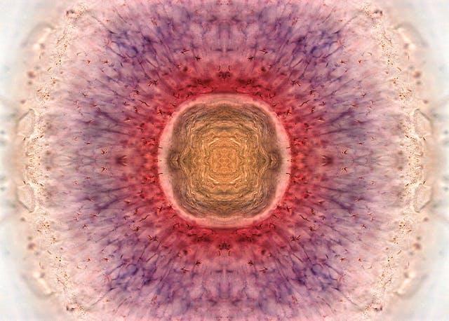 Circular patterns of orange, pink and purple.