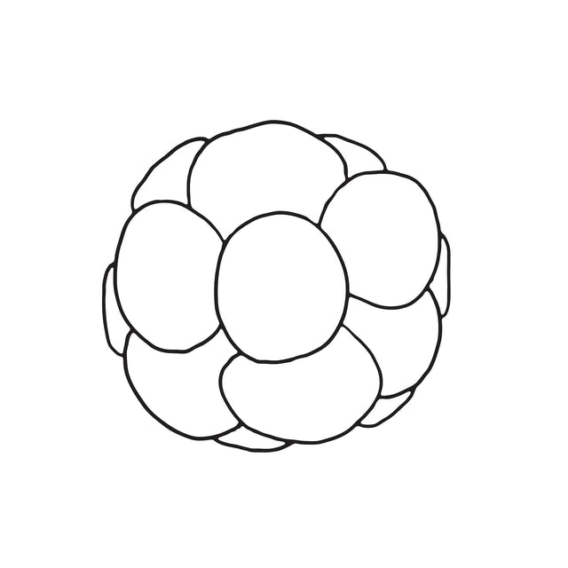 Line illustration of round shape made of circles bunched together - representing cells dividing