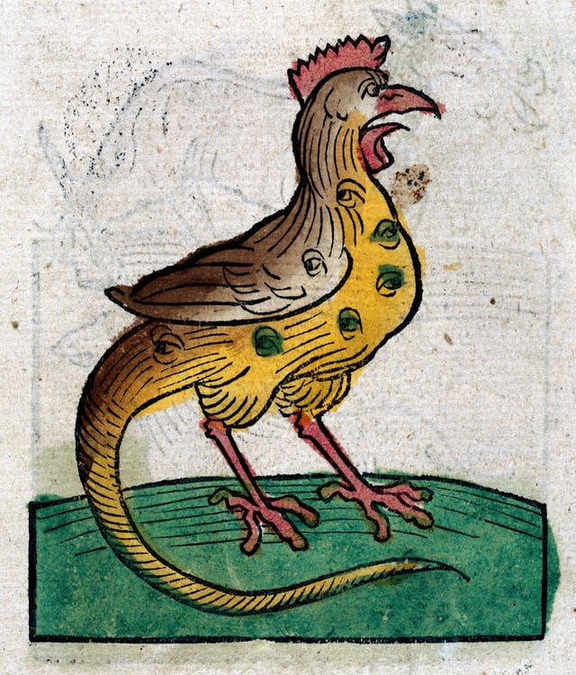 Painted woodcut style illustration of a cockrel, which appears to have eyes all over its body and on its wing.