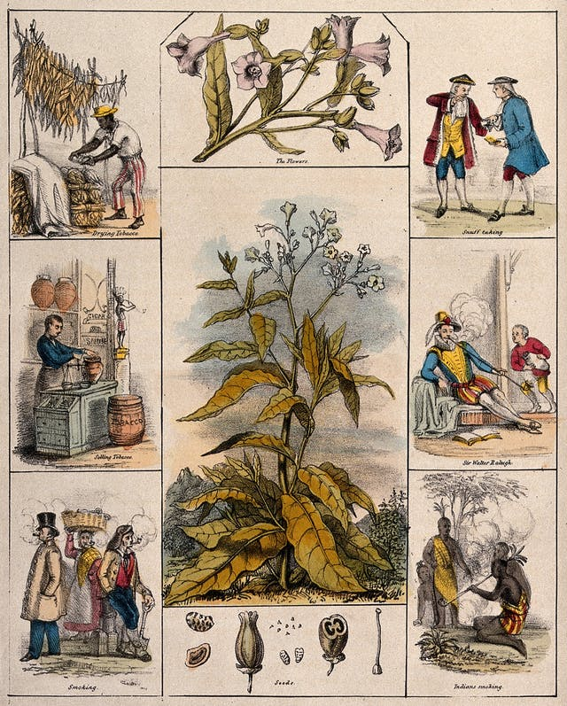 Coloured lithograph showing the tobacco plant, the flowers, seeds, drying tobacco, selling tobacco, smoking, snuff taking, Sir Walter Raleigh, Indians smoking