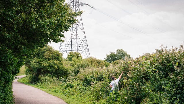 Photograph of a man wearing a white t-shirt in a landscape of trees and wild bushes. A sealed footpath snakes trough the scene and in the distance the overcast skyline is dominated by a large electricity pylon. The man is located in the overgrown verge, reaching up to pick flowers.