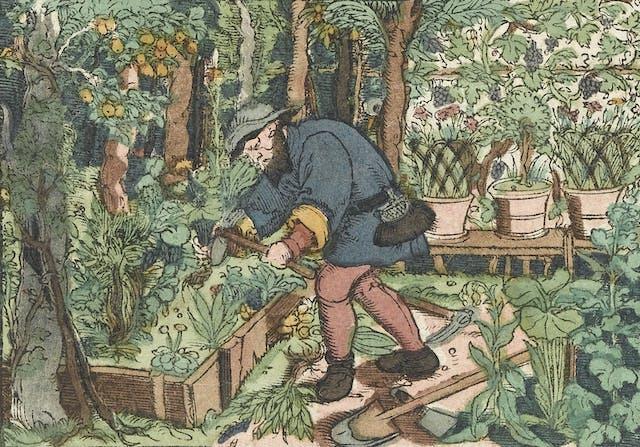 Man working in a herb garden