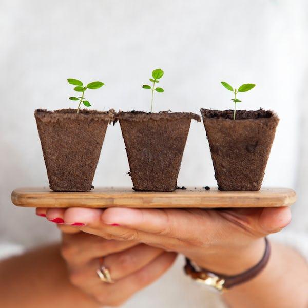 Hands holding three new plants