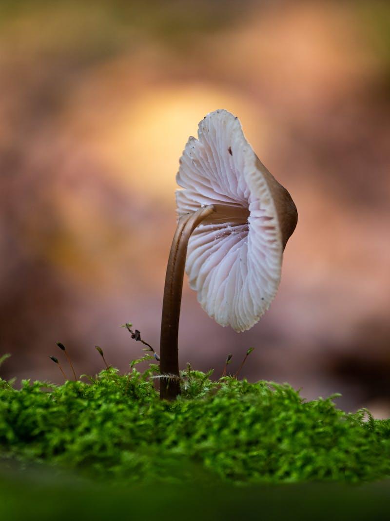 Mushroom in mossy ground