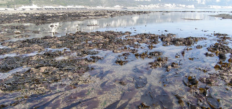 Low tide at the beach at Copt Point