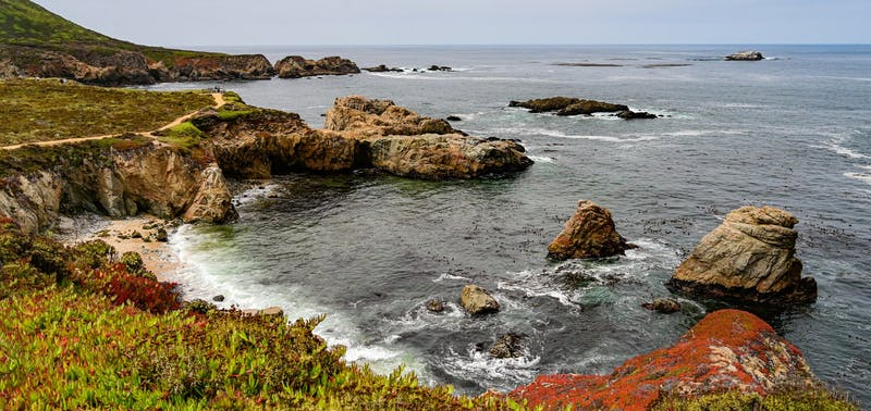 A coastal view of plants, rocks and wildlife