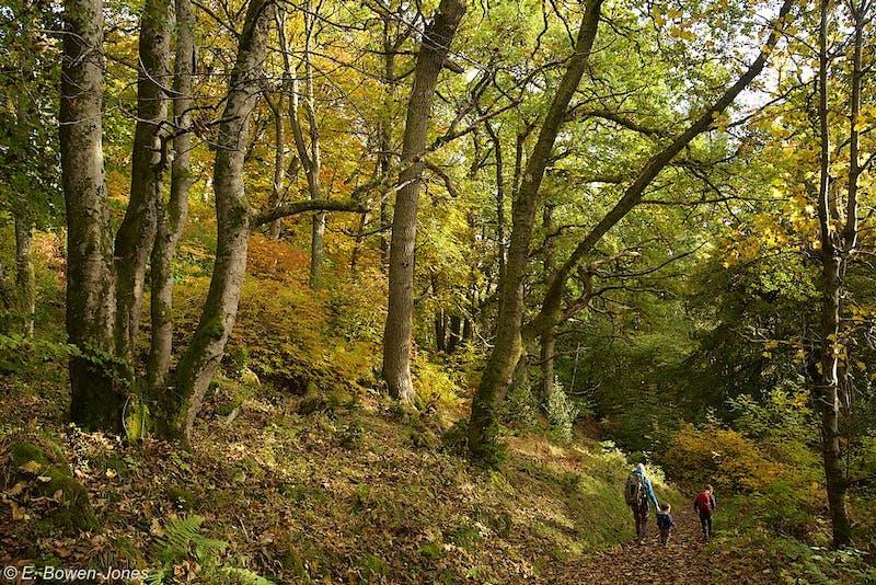 People walking through woodlands