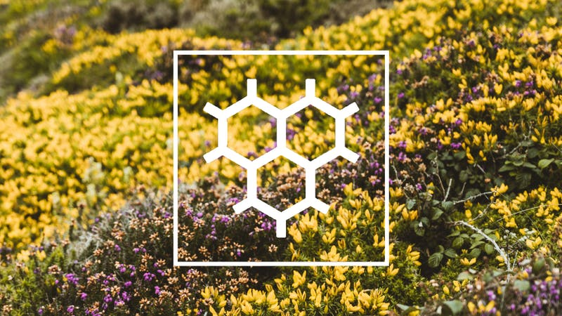 Wilder Carbon Logo over Yellow and Purple Heather